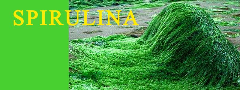 spirulina-banner