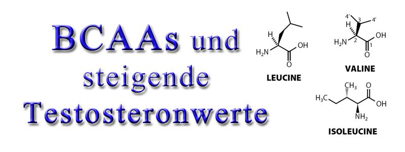 bcaas-und-steigende-testosteronwerte