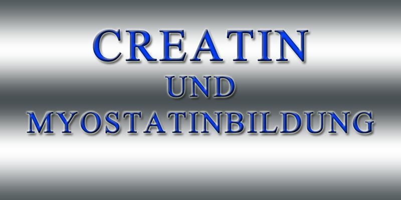 CREATIN UND MYOSTATINBILDUNG